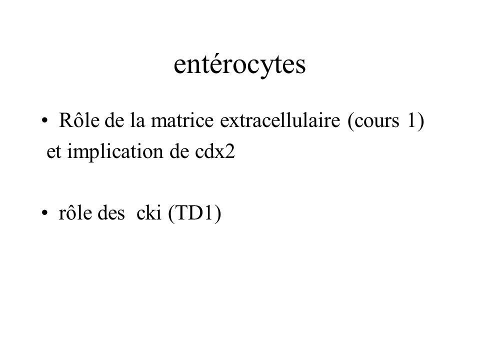 entérocytes Rôle de la matrice extracellulaire (cours 1) et implication de cdx2 rôle des cki (TD1)