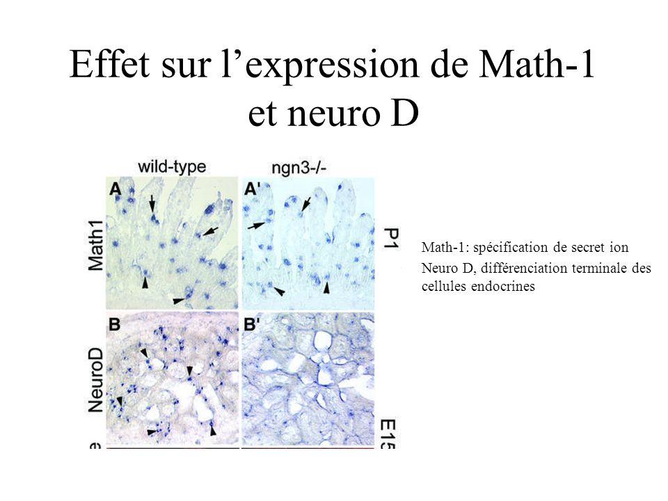 Effet sur lexpression de Math-1 et neuro D Math-1: spécification de secret ion Neuro D, différenciation terminale des cellules endocrines