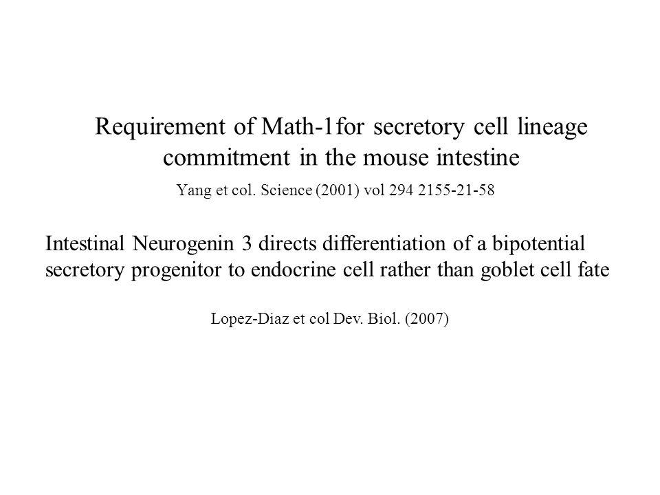 But des articles: rôle de math-1 dans la spécification Math-1: facteur de transcription; homologue chez les mammifères de « Drosophilia atonal gene ».