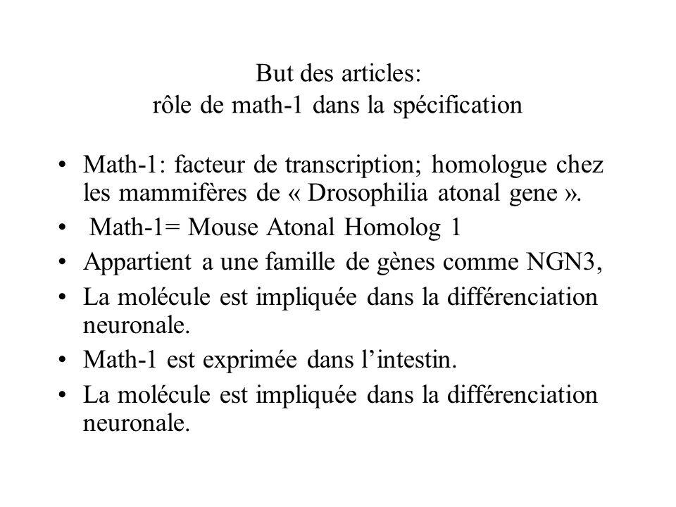 Invalidation ngn3 (souris ngn3-)