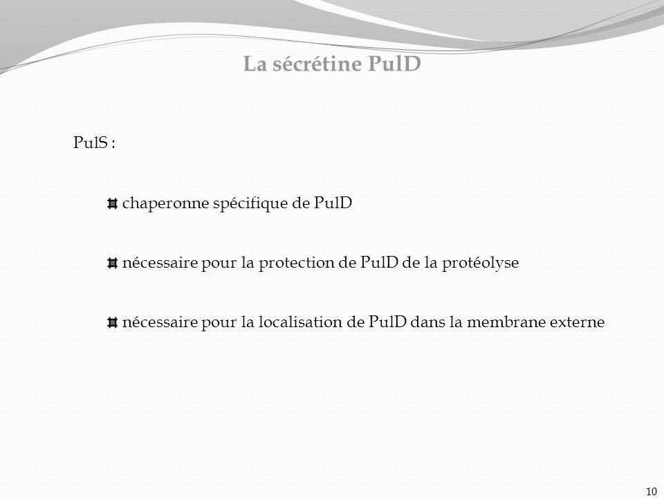 La sécrétine PulD PulS : chaperonne spécifique de PulD nécessaire pour la protection de PulD de la protéolyse nécessaire pour la localisation de PulD