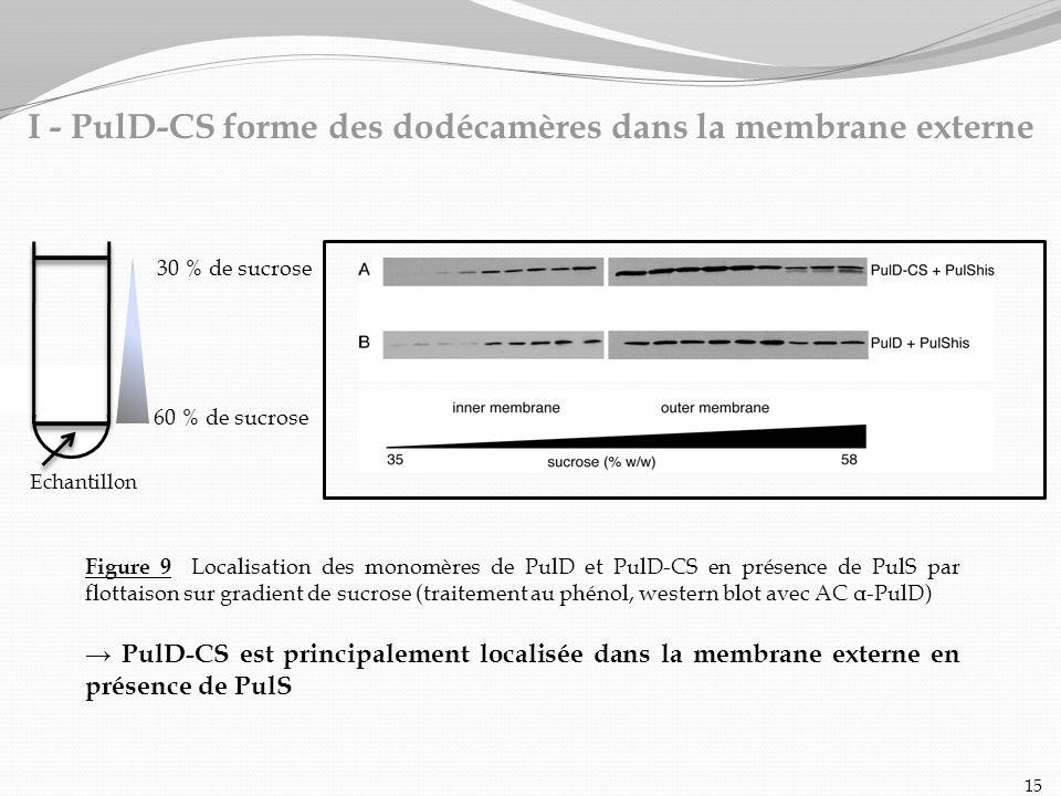 Figure 9 Localisation des monomères de PulD et PulD-CS en présence de PulS par flottaison sur gradient de sucrose (traitement au phénol, western blot