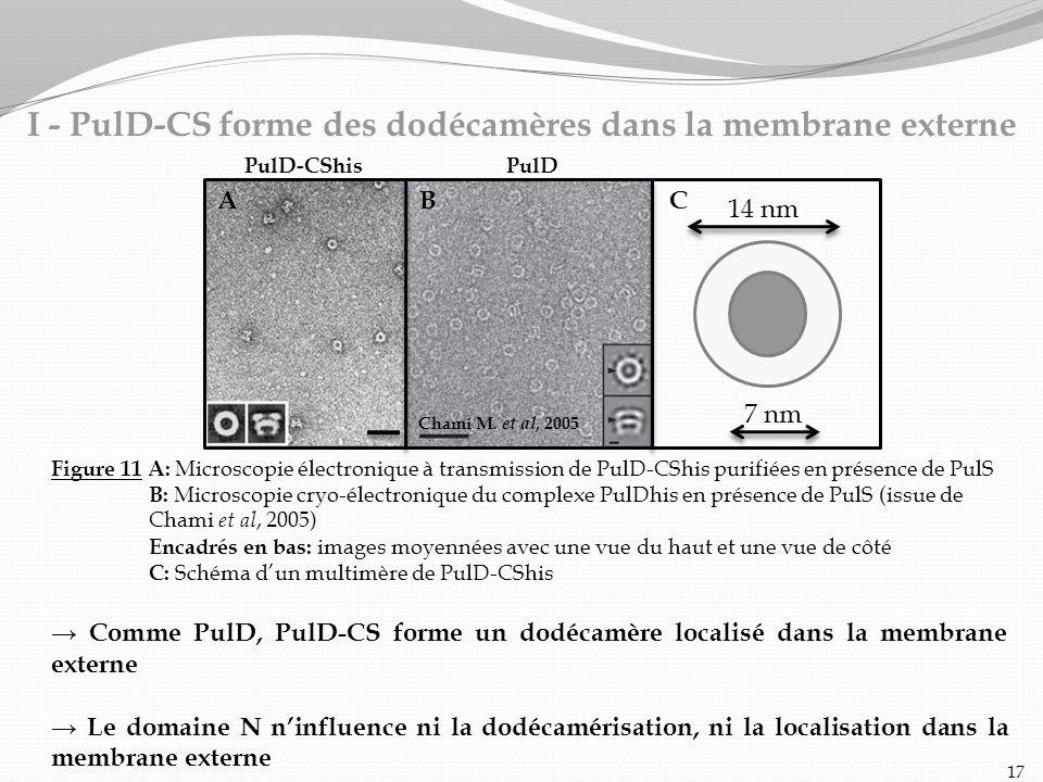 Figure 11 A: Microscopie électronique à transmission de PulD-CShis purifiées en présence de PulS B: Microscopie cryo-électronique du complexe PulDhis