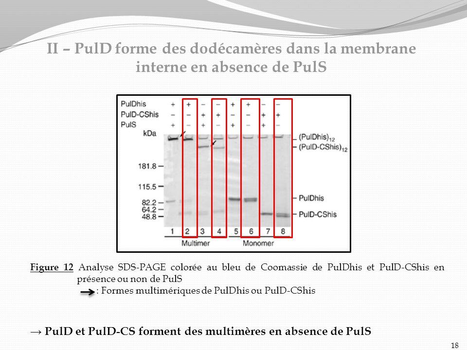 II – PulD forme des dodécamères dans la membrane interne en absence de PulS Figure 12 Analyse SDS-PAGE colorée au bleu de Coomassie de PulDhis et PulD