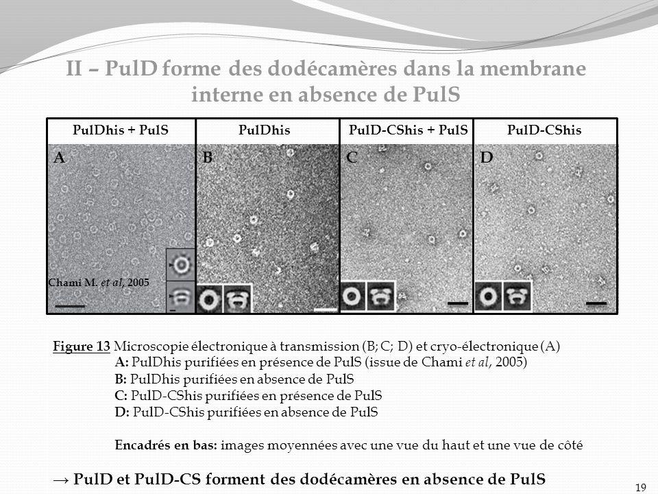 Figure 13 Microscopie électronique à transmission (B; C; D) et cryo-électronique (A) A: PulDhis purifiées en présence de PulS (issue de Chami et al, 2