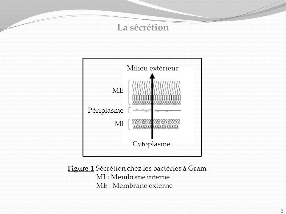 La sécrétion Figure 1 Sécrétion chez les bactéries à Gram – MI : Membrane interne ME : Membrane externe Milieu extérieur Cytoplasme ME Périplasme MI 2