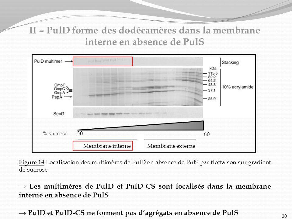 Figure 14 Localisation des multimères de PulD en absence de PulS par flottaison sur gradient de sucrose Les multimères de PulD et PulD-CS sont localis