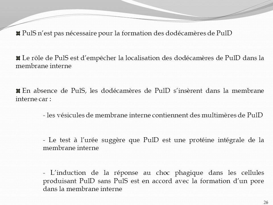 PulS nest pas nécessaire pour la formation des dodécamères de PulD Le rôle de PulS est dempêcher la localisation des dodécamères de PulD dans la membr