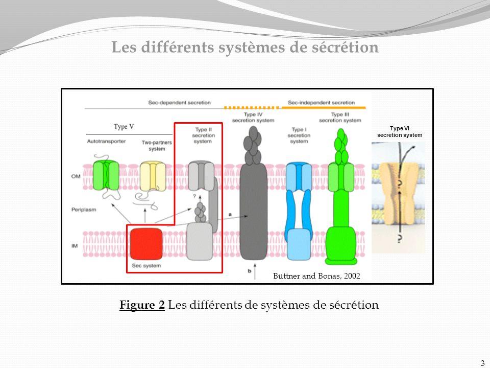 Les différents systèmes de sécrétion Figure 2 Les différents de systèmes de sécrétion 3 Büttner and Bonas, 2002 Type VI secretion system