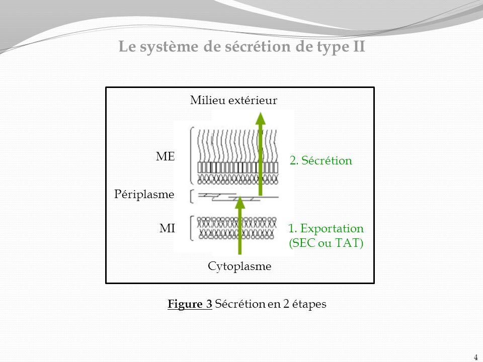 Le système de sécrétion de type II Figure 3 Sécrétion en 2 étapes Milieu extérieur ME Périplasme MI Cytoplasme 2. Sécrétion 1. Exportation (SEC ou TAT