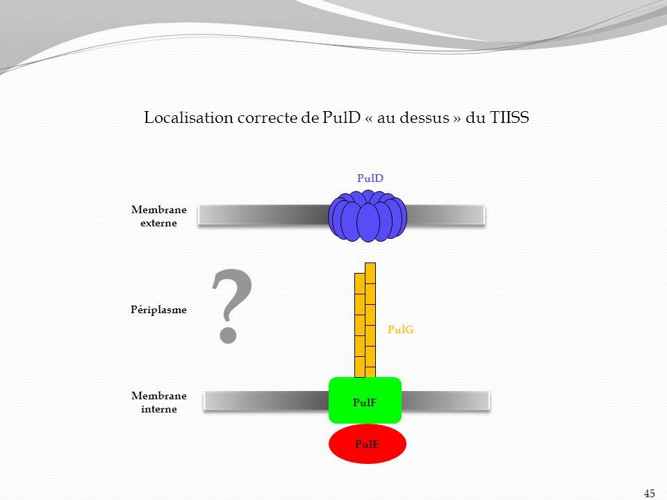 Localisation correcte de PulD « au dessus » du TIISS 45 Membrane interne Périplasme Membrane externe PulD PulE PulG ? PulF