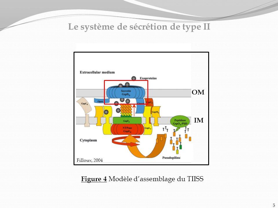 Le système de sécrétion de type II Figure 4 Modèle dassemblage du TIISS 5 OM IM Filloux, 2004
