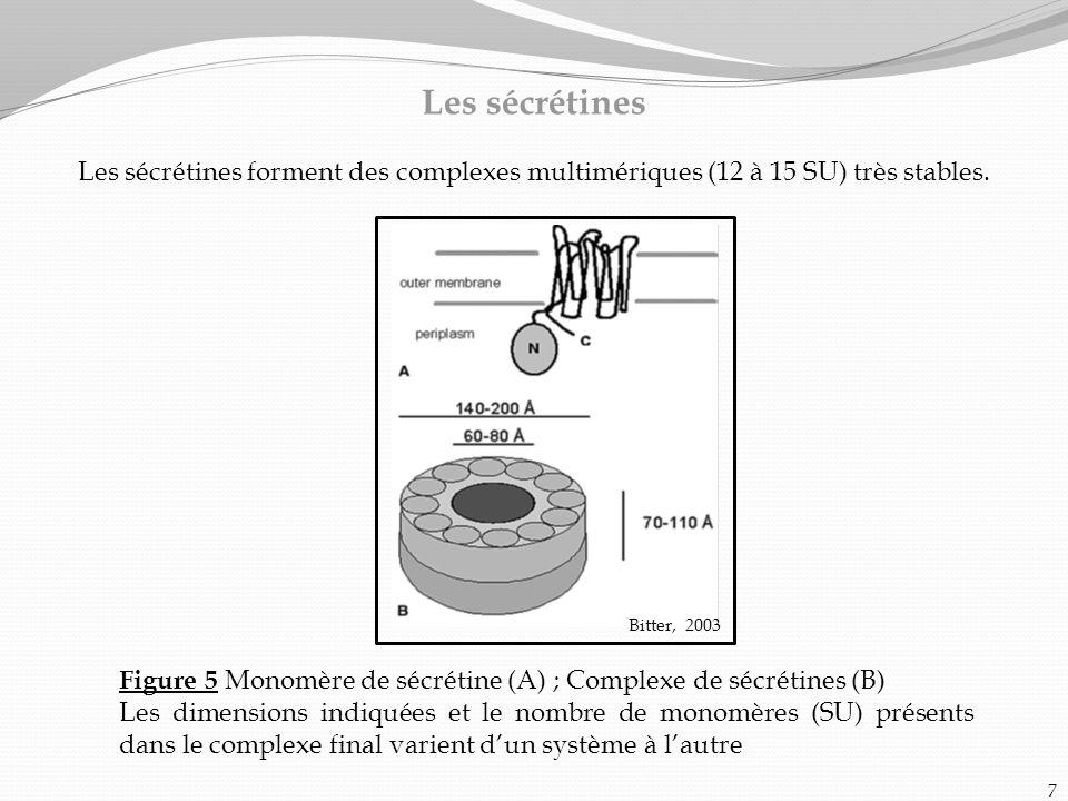 Les sécrétines Les sécrétines forment des complexes multimériques (12 à 15 SU) très stables. Figure 5 Monomère de sécrétine (A) ; Complexe de sécrétin