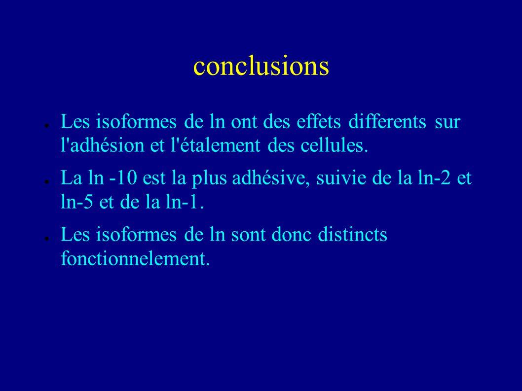 isoformes de laminine et adhésion des cellules intestinales