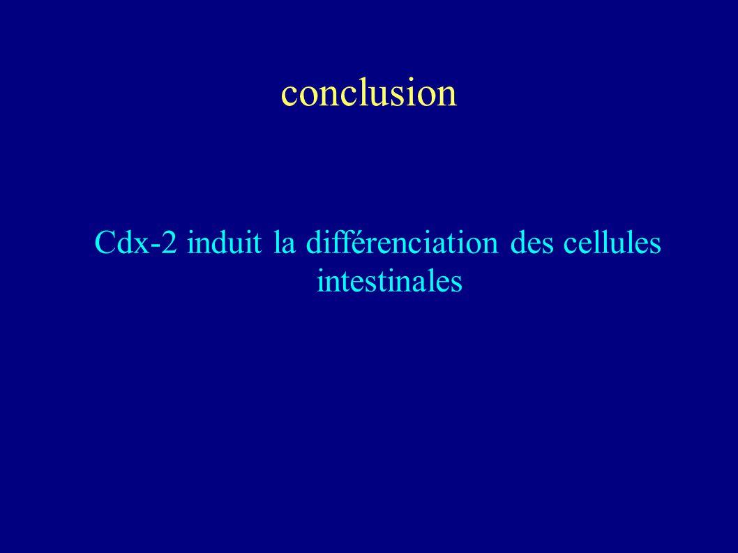 Cdx-2 et differenciation Proteines ARNm Courbe de croissance