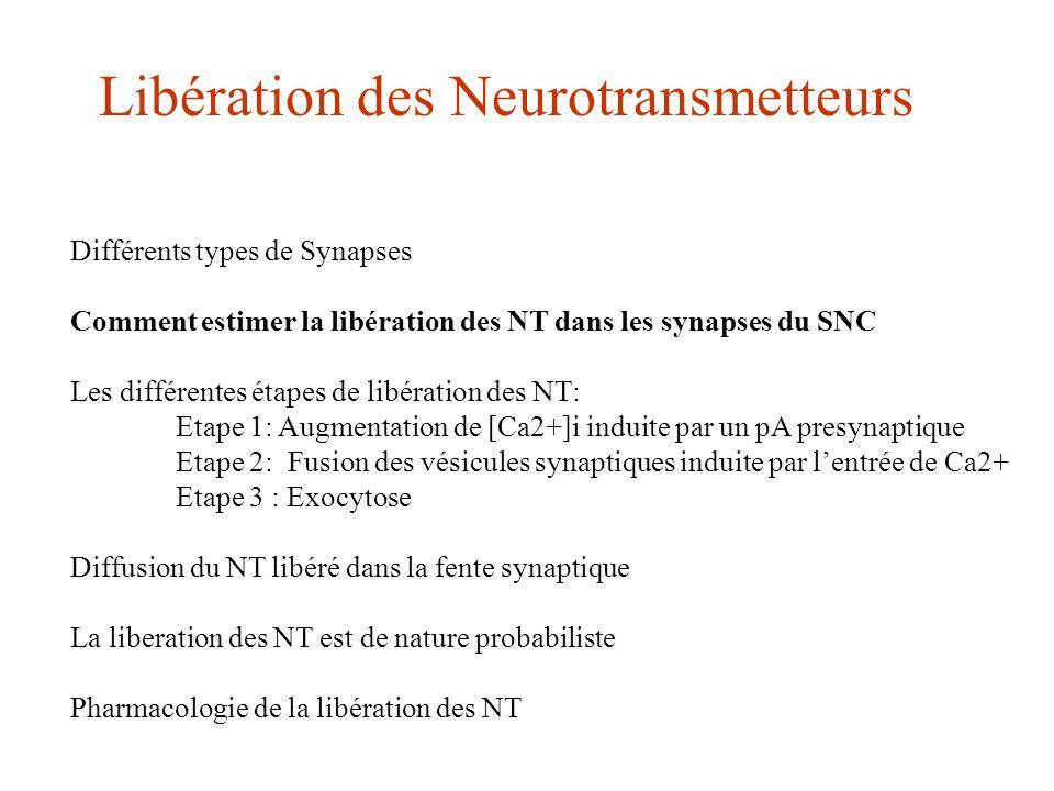 Libération des Neurotransmetteurs Différents types de Synapses Comment estimer la libération des NT dans les synapses du SNC Les différentes étapes de