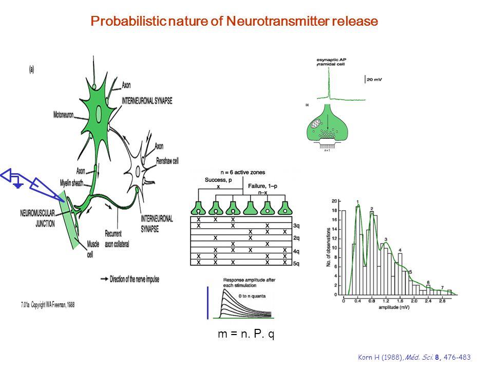 Probabilistic nature of Neurotransmitter release KornH (1988),Méd.Sci.8,476-483 m = n. P. q