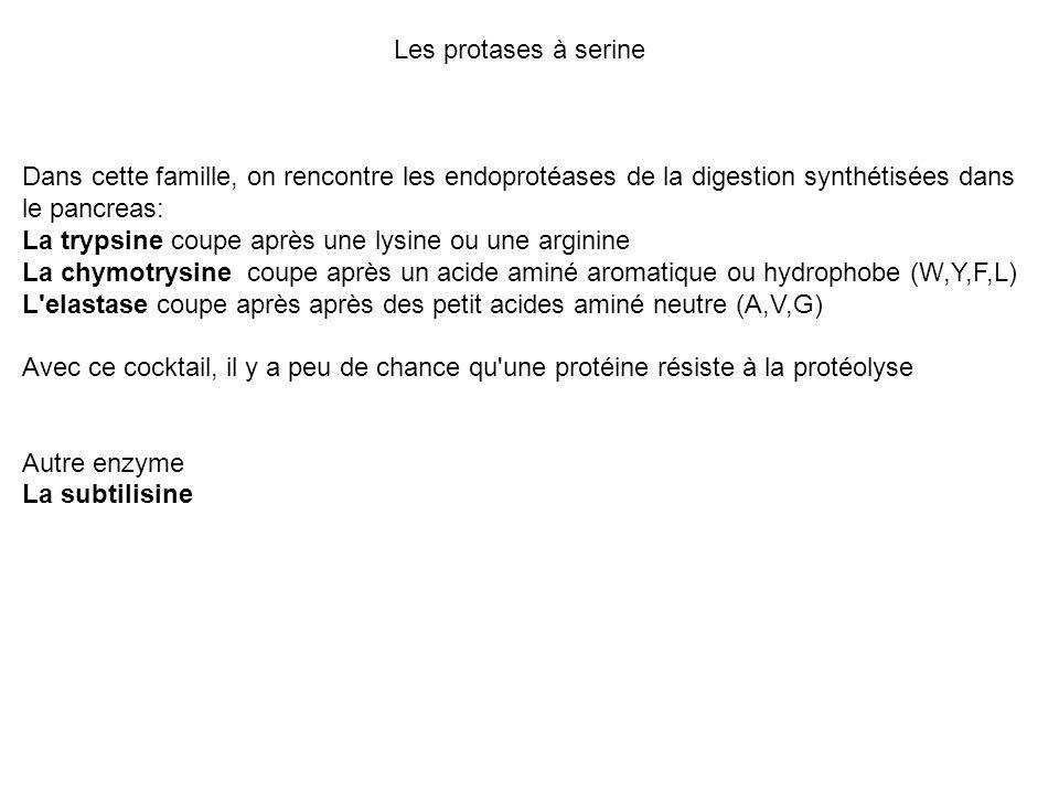 Les protases à serine Dans cette famille, on rencontre les endoprotéases de la digestion synthétisées dans le pancreas: La trypsine coupe après une ly