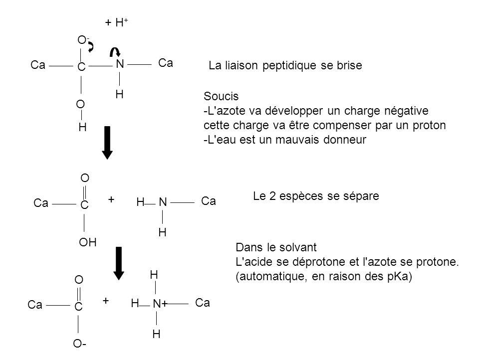 Ca C O-O- N H O + H + H Soucis -L'azote va développer un charge négative cette charge va être compenser par un proton -L'eau est un mauvais donneur Ca
