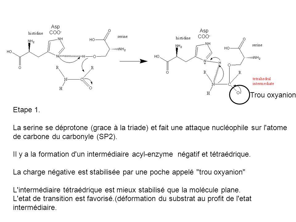 Etape 1. La serine se déprotone (grace à la triade) et fait une attaque nucléophile sur l'atome de carbone du carbonyle (SP2). Il y a la formation d'u