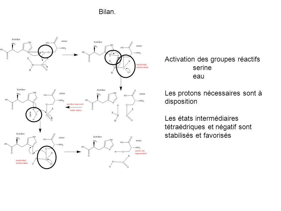 Activation des groupes réactifs serine eau Les protons nécessaires sont à disposition Les états intermédiaires tétraédriques et négatif sont stabilisé