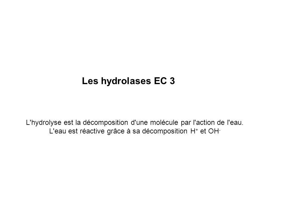Les hydrolases EC 3 L'hydrolyse est la décomposition d'une molécule par l'action de l'eau. L'eau est réactive grâce à sa décomposition H + et OH -
