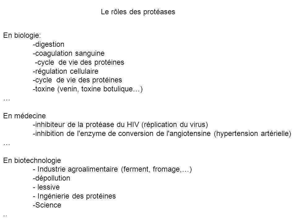 Le rôles des protéases En biologie: -digestion -coagulation sanguine -cycle de vie des protéines -régulation cellulaire -cycle de vie des protéines -t