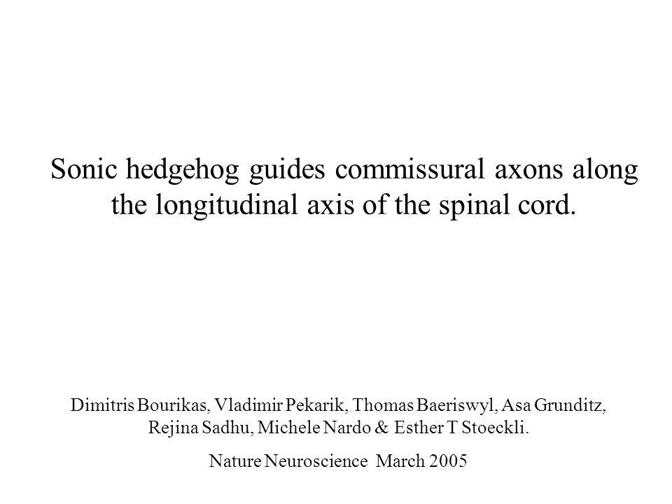 Sonic hedgehog guides commissural axons along the longitudinal axis of the spinal cord. Dimitris Bourikas, Vladimir Pekarik, Thomas Baeriswyl, Asa Gru