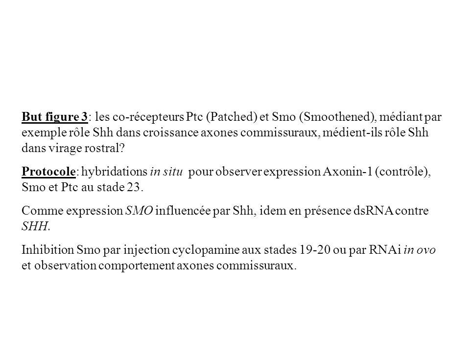 But figure 3: les co-récepteurs Ptc (Patched) et Smo (Smoothened), médiant par exemple rôle Shh dans croissance axones commissuraux, médient-ils rôle
