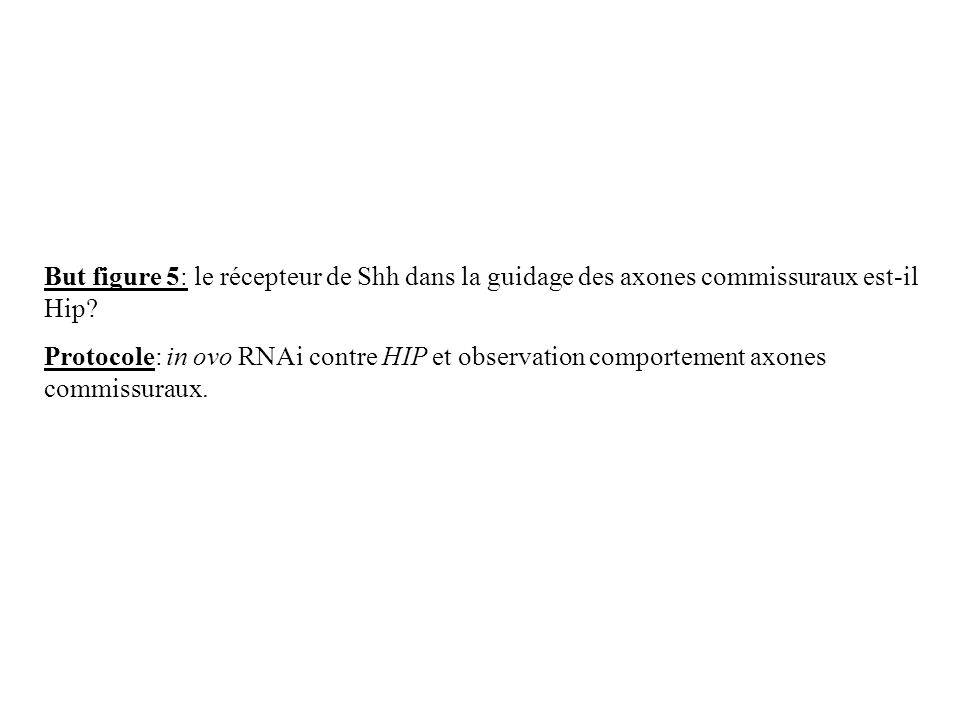 But figure 5: le récepteur de Shh dans la guidage des axones commissuraux est-il Hip? Protocole: in ovo RNAi contre HIP et observation comportement ax
