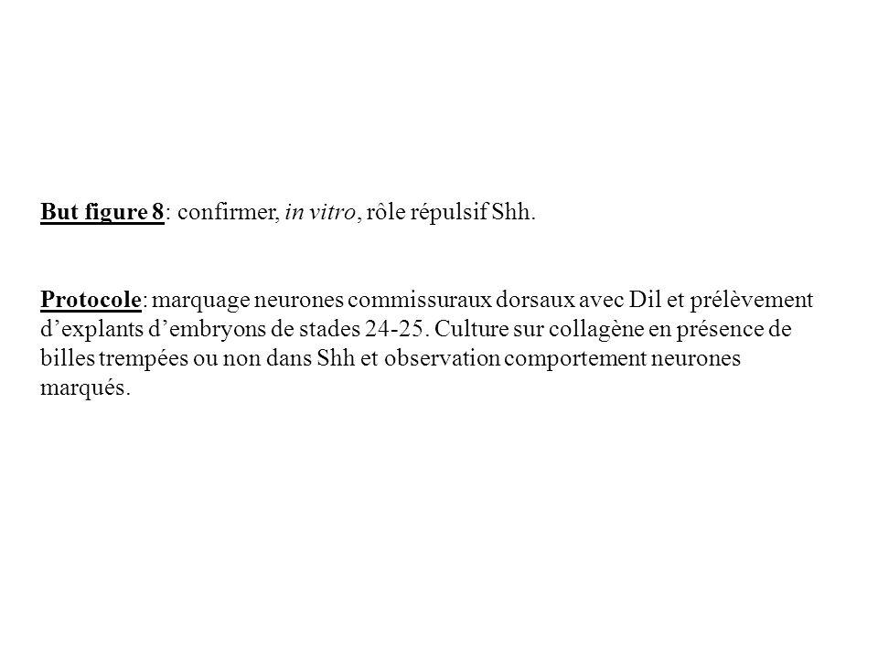 But figure 8: confirmer, in vitro, rôle répulsif Shh. Protocole: marquage neurones commissuraux dorsaux avec Dil et prélèvement dexplants dembryons de