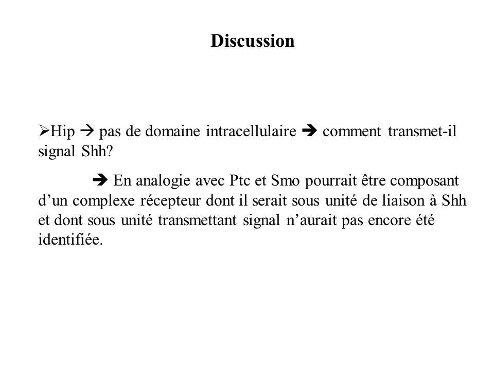 Discussion Hip pas de domaine intracellulaire comment transmet-il signal Shh? En analogie avec Ptc et Smo pourrait être composant dun complexe récepte