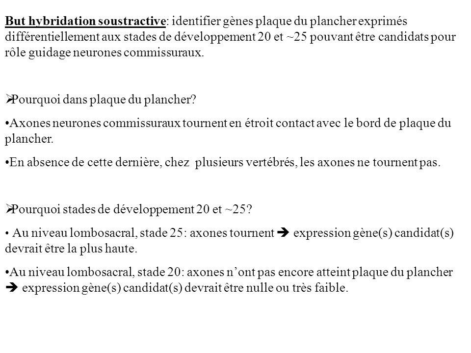 But hybridation soustractive: identifier gènes plaque du plancher exprimés différentiellement aux stades de développement 20 et ~25 pouvant être candi