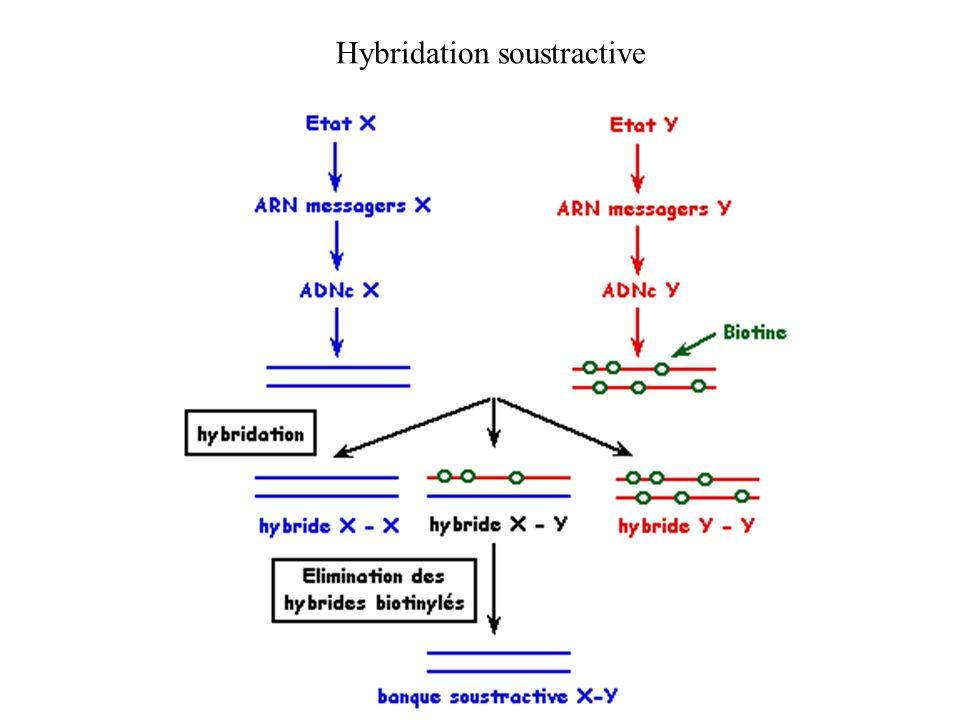 Hybridation soustractive