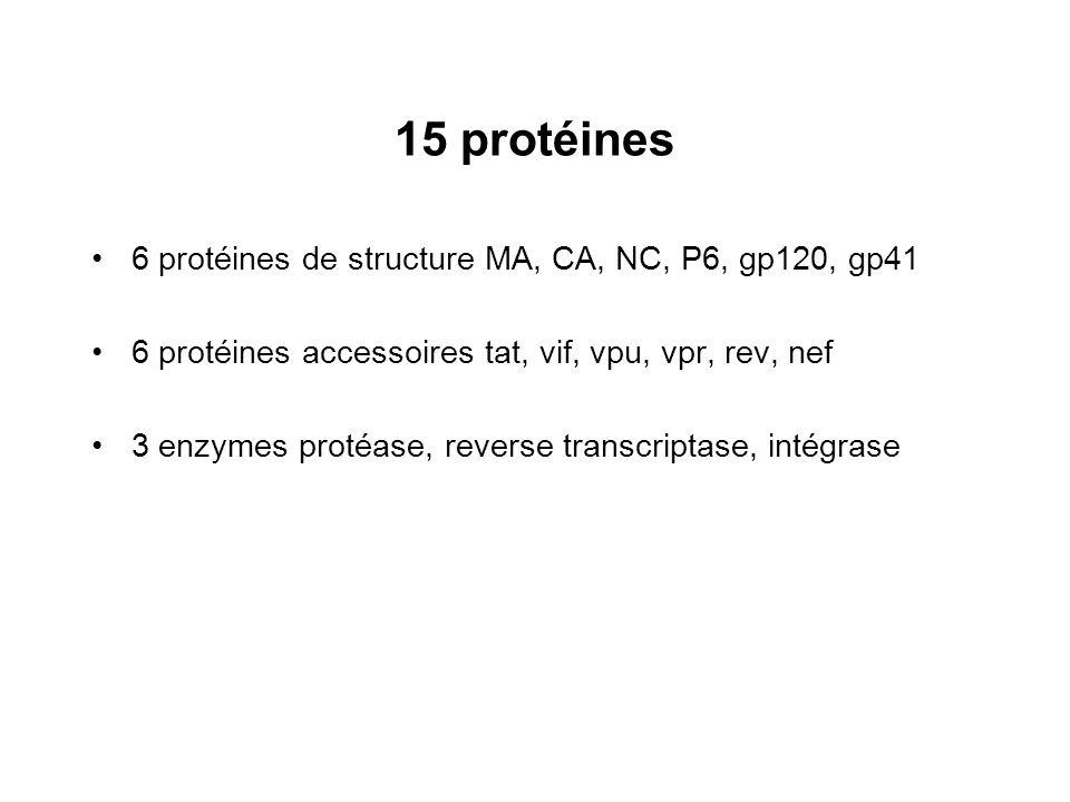 15 protéines 6 protéines de structure MA, CA, NC, P6, gp120, gp41 6 protéines accessoires tat, vif, vpu, vpr, rev, nef 3 enzymes protéase, reverse tra