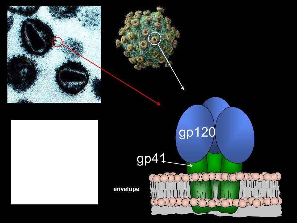 Viral envelope gp120 gp41