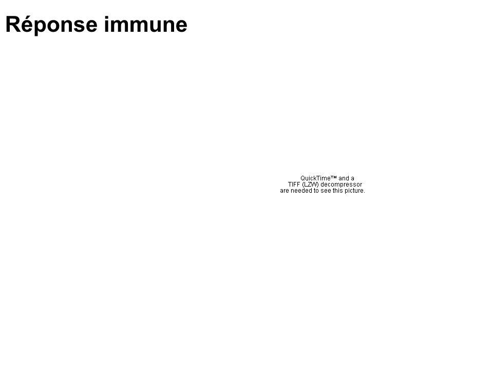 Réponse immune