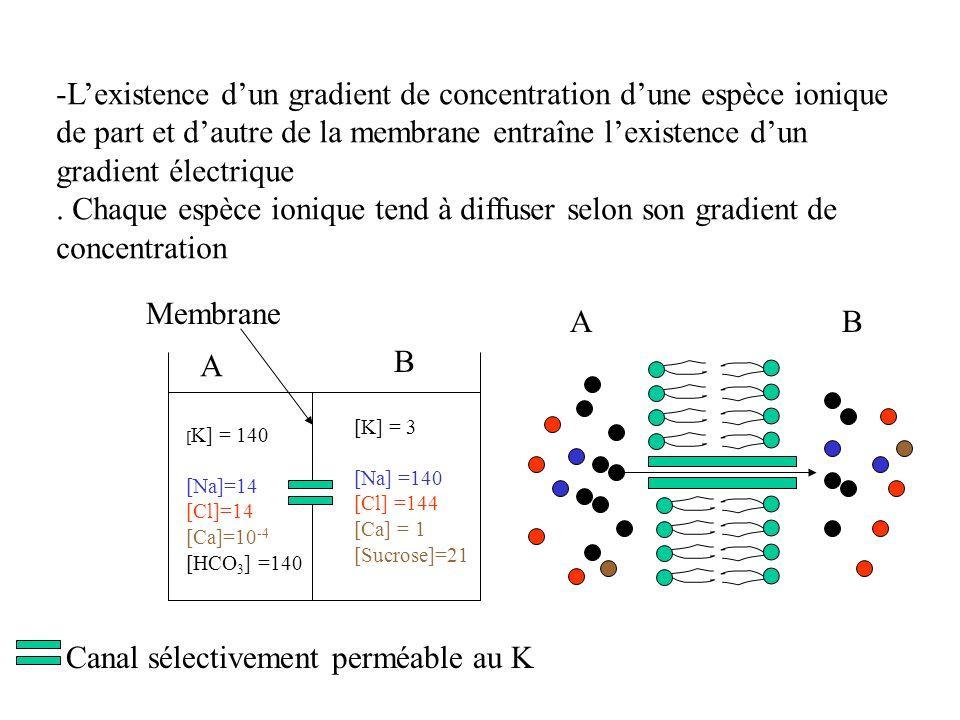 -Lexistence dun gradient de concentration dune espèce ionique de part et dautre de la membrane entraîne lexistence dun gradient électrique. Chaque esp