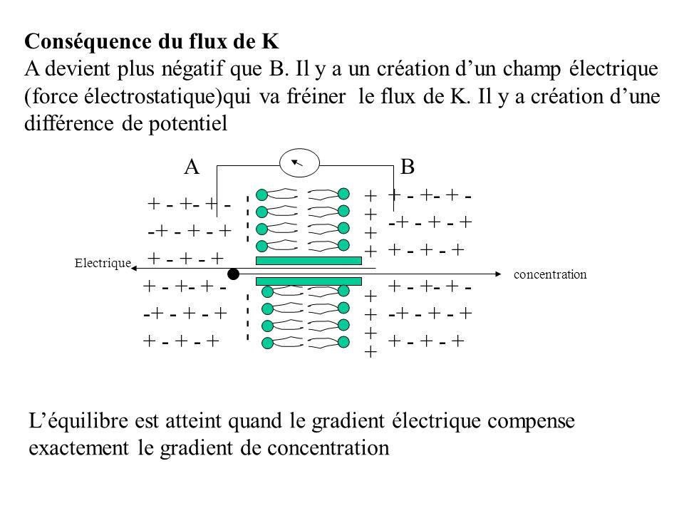 Conséquence du flux de K A devient plus négatif que B. Il y a un création dun champ électrique (force électrostatique)qui va fréiner le flux de K. Il