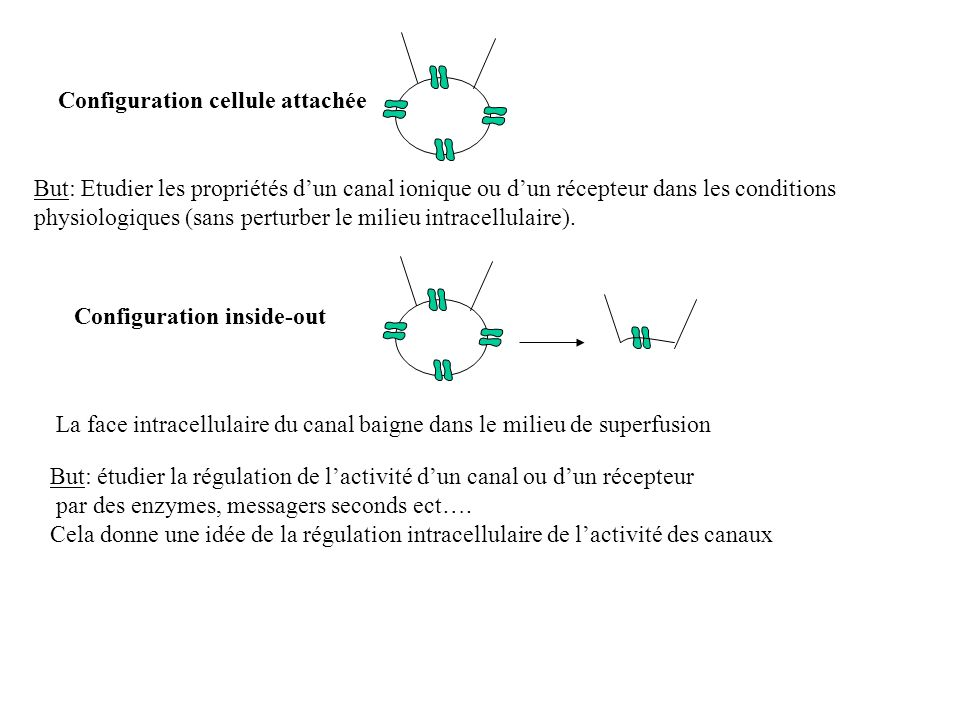 Configuration inside-out But: étudier la régulation de lactivité dun canal ou dun récepteur par des enzymes, messagers seconds ect…. Cela donne une id