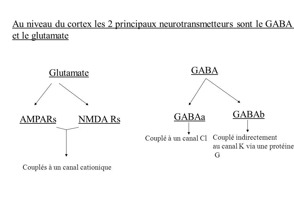 Au niveau du cortex les 2 principaux neurotransmetteurs sont le GABA et le glutamate Glutamate AMPARsNMDA Rs Couplés à un canal cationique GABA GABAa
