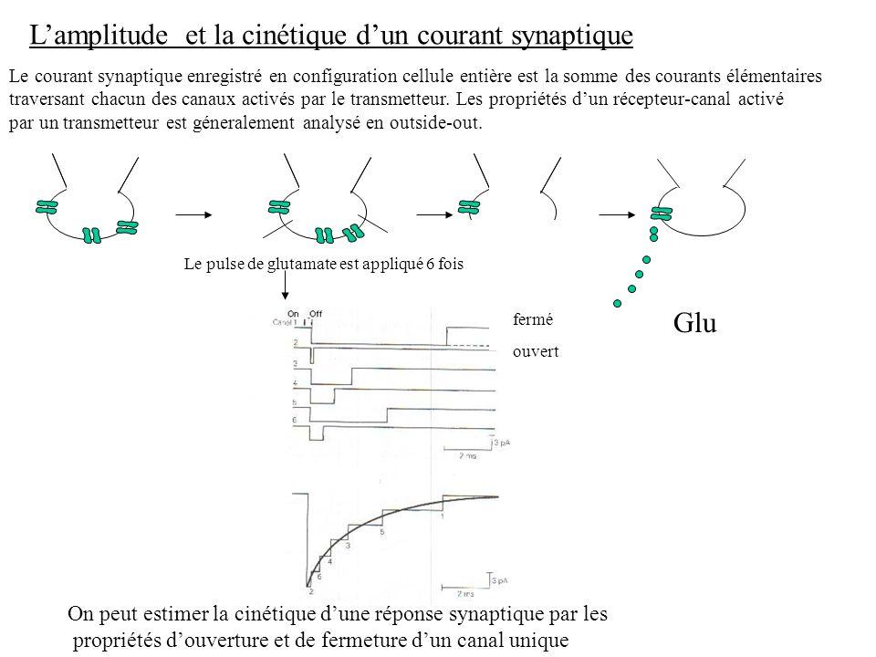Le courant synaptique enregistré en configuration cellule entière est la somme des courants élémentaires traversant chacun des canaux activés par le t