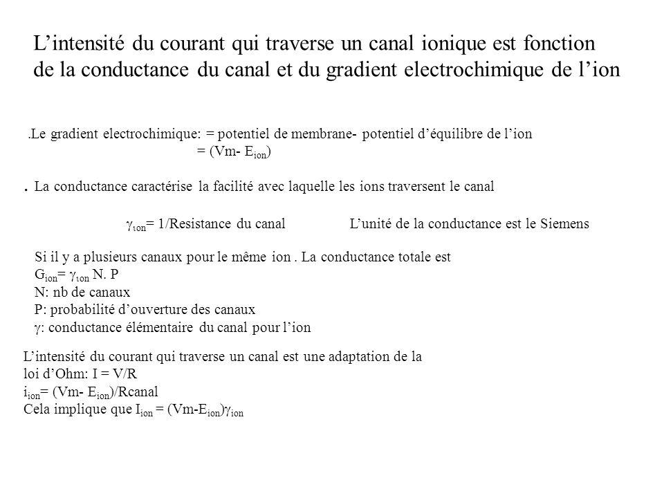 Lintensité du courant qui traverse un canal ionique est fonction de la conductance du canal et du gradient electrochimique de lion.Le gradient electro