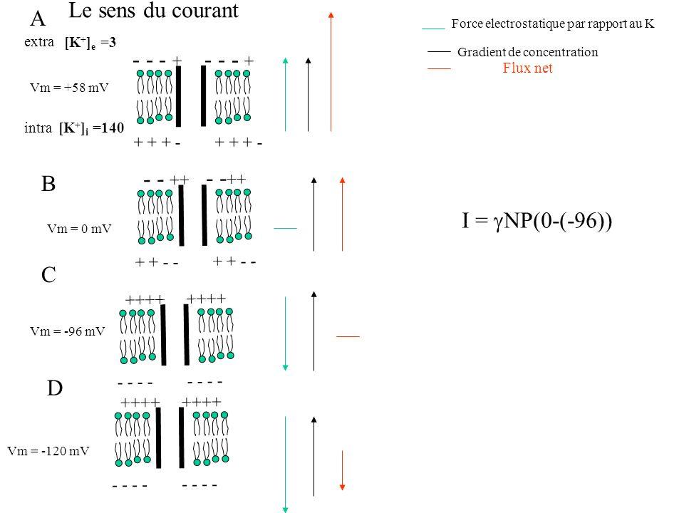 intra - - ++ + + - - Vm = 0 mV ++++ - - - - A B C D ++++ - - - - extra [K + ] e =3 Vm = -96 mV Vm = -120 mV - - - + + + + - [K + ] i =140 Force electr