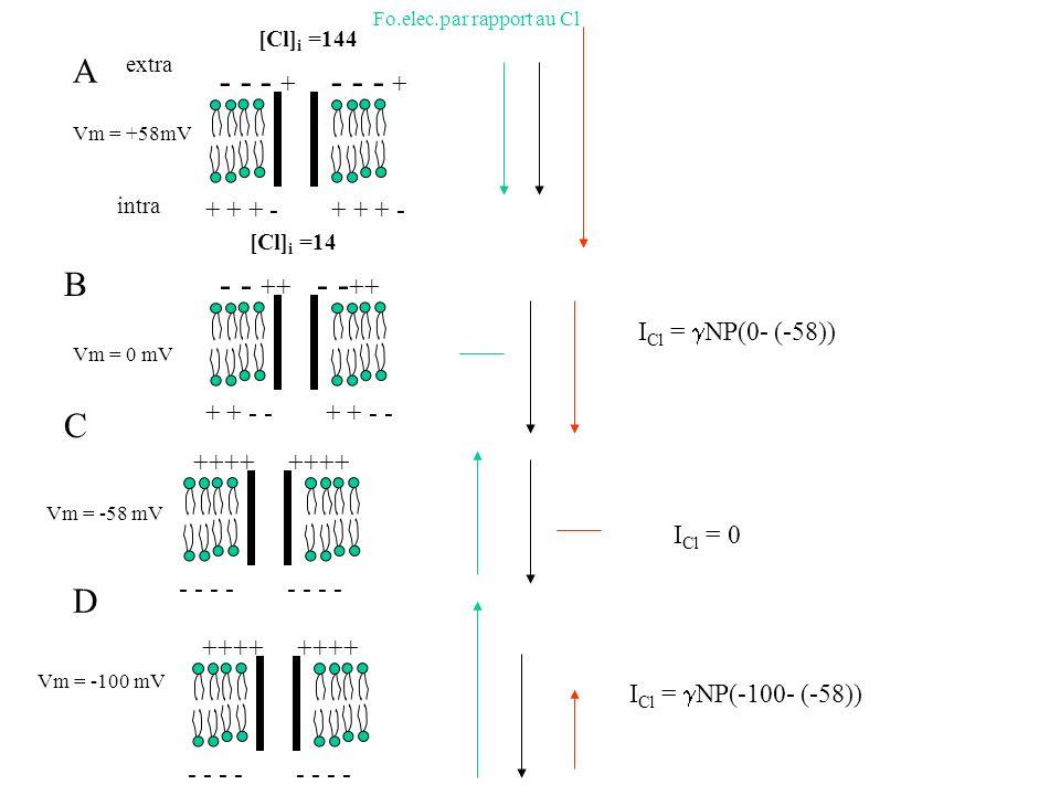 extra intra Vm = +58mV - - - + + + + - - - ++ + + - - Vm = 0 mV A B C D ++++ - - - - [Cl] i =14 Vm = -58 mV ++++ - - - - Vm = -100 mV [Cl] i =144 Fo.e
