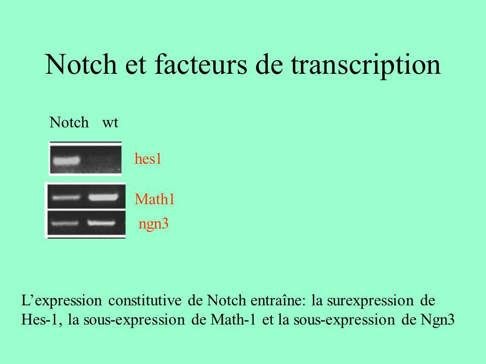 Notch et cryptdine wt Notch Lexpression constitutive de Notch inhibe lexpression de cryptdine et donc la différenciation des cellules de Paneth