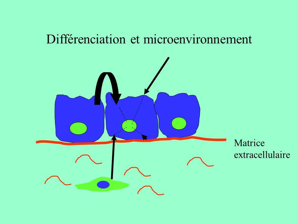 Devenir d une cellule souche Auto-renouvellement Cellule souche Spécification ( absorption ou secretion?) Tris (rester dans les cryptes ou migrer?) Différenciation MORT