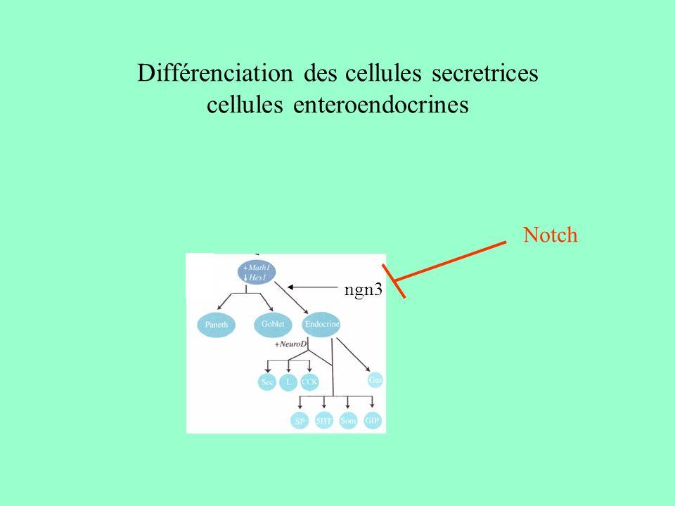 Différenciation des entérocytes rôle des isoformes de laminine Ln 5 et 10 Ln 1 (induction de la différenciation) Via linduction de genes homeotiques Cdx-2