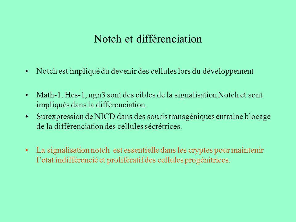 Notch et différenciation Notch est impliqué du devenir des cellules lors du développement Math-1, Hes-1, ngn3 sont des cibles de la signalisation Notch et sont impliqués dans la différenciation.