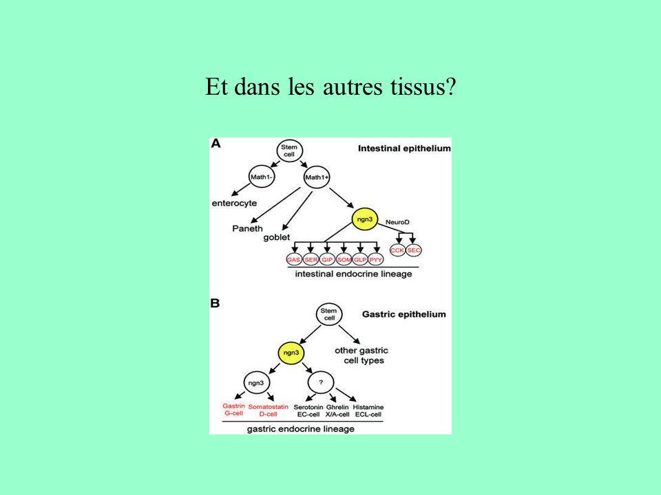 Et dans les autres tissus.La situation est aussi complexe que dans lintestin.